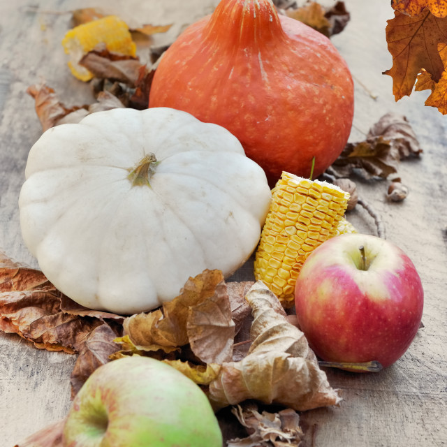 """squashes and apples in brown leaves and oak leaves at the top"" stock image"