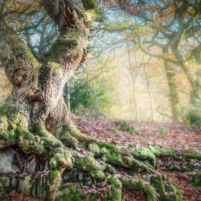 """""""Dreamy English woodland"""" stock image"""