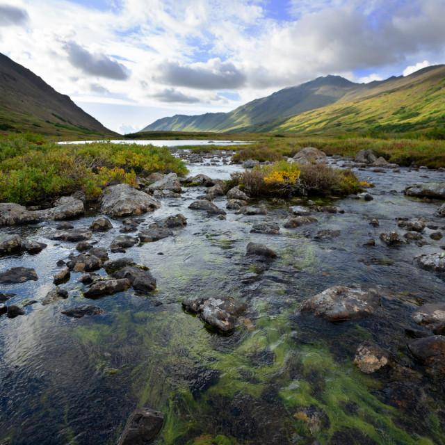 """""""River Rock Algae"""" stock image"""