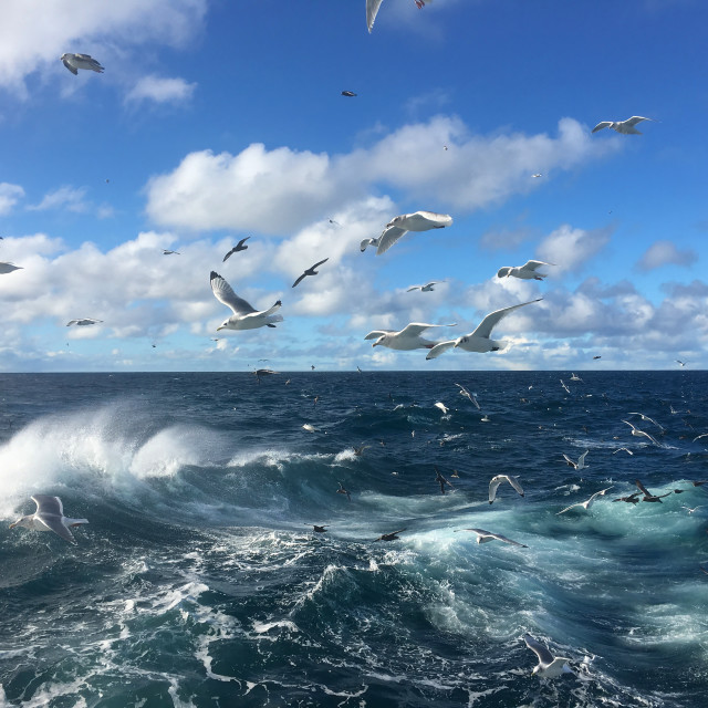"""""""Gulls on a Wave"""" stock image"""