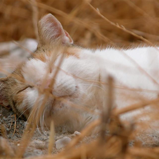 """Greek Cat"" stock image"
