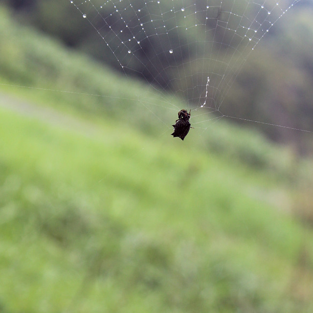 """""""caught in a spider web"""" stock image"""