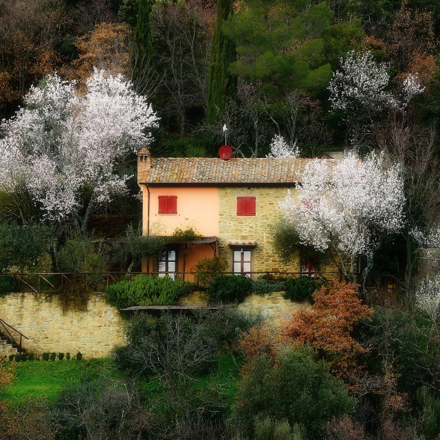 """""""Tuscan cottage with almonds trees"""" stock image"""