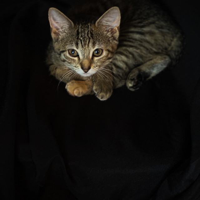 """Tiger kitten laying on a black chair"" stock image"