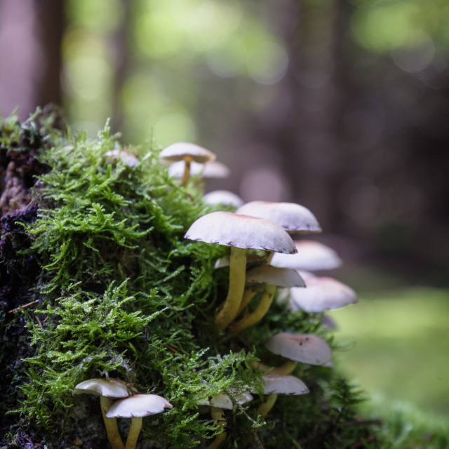 """Mushrooms in Devilla Forest"" stock image"