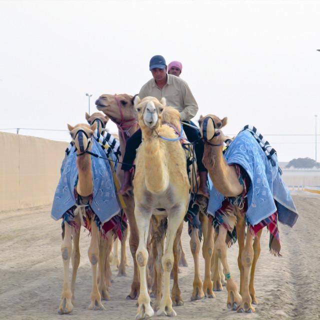 """""""Shepherds & Camels"""" stock image"""