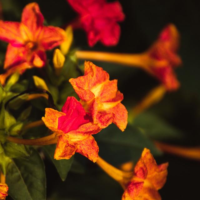 """Wonderflowers"" stock image"