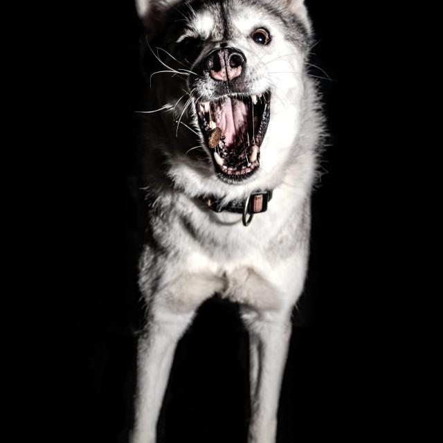 """Hungry Dog"" stock image"