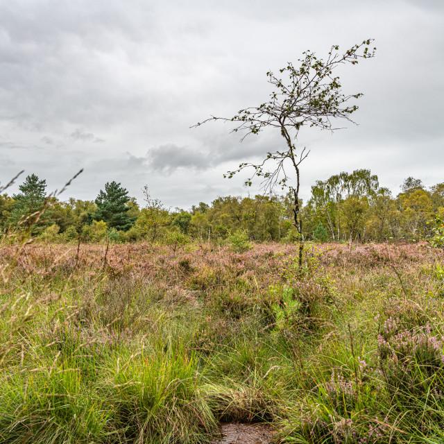 """Kirkconnell Flow Nature Reserve, Dumfries & Galloway, Scotland"" stock image"