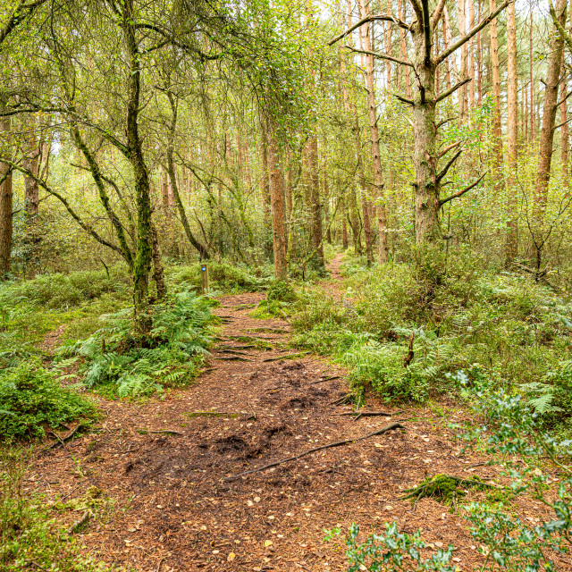 """""""Muddy Footpath, Kirkconnell Flow Nature Reserve, Dumfries & Galloway, Scotland"""" stock image"""
