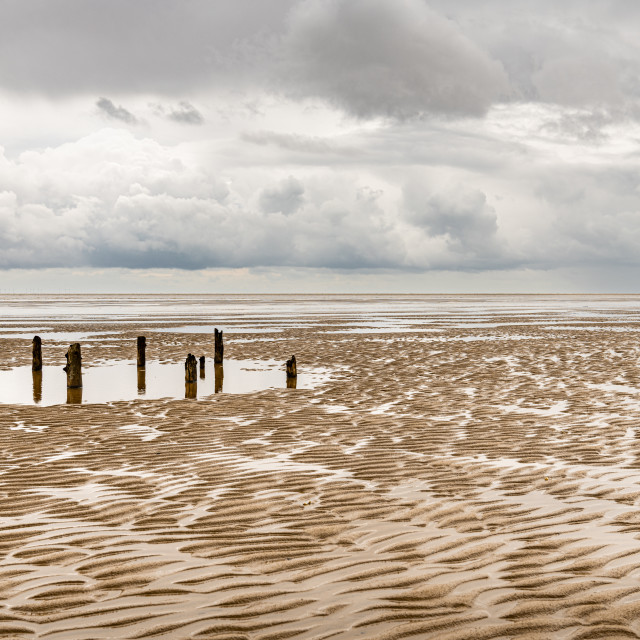 """""""Old Wood Pillings on Mersehead Sands, Dumfries & Galloway, Scotland"""" stock image"""