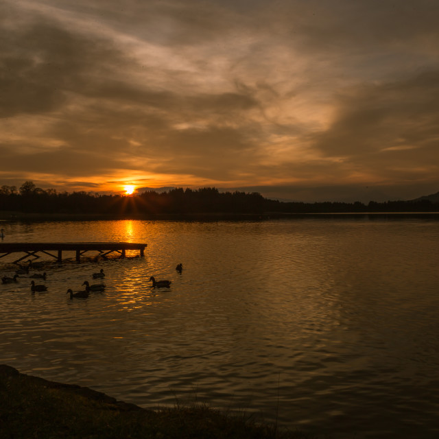"""Ducks at sunset"" stock image"