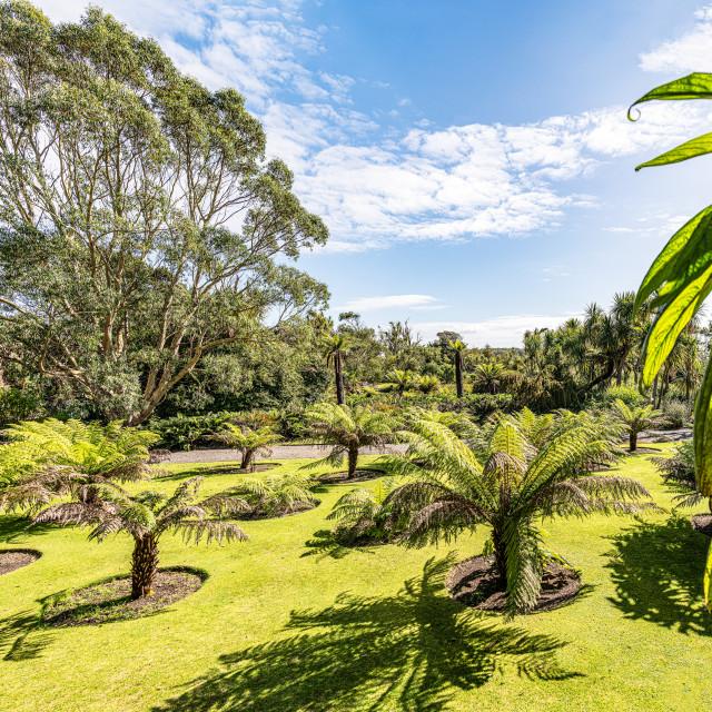 """Botanical Gardens, Port Lagon, Dumfries & Galloway, Scotland"" stock image"