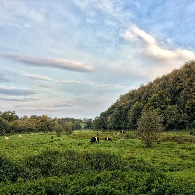 """""""The Queen's Marsh"""" stock image"""