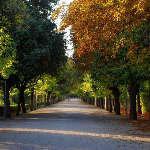 """""""The 1km long Parterre promenade of Cortona"""" stock image"""