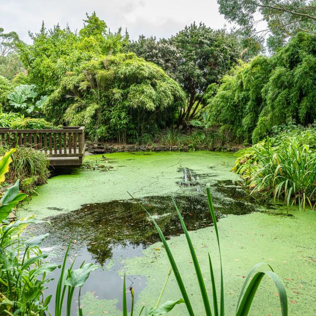 """Pond in the Botanical Gardens, Port Lagon, Dumfries & Galloway, Scotland"" stock image"