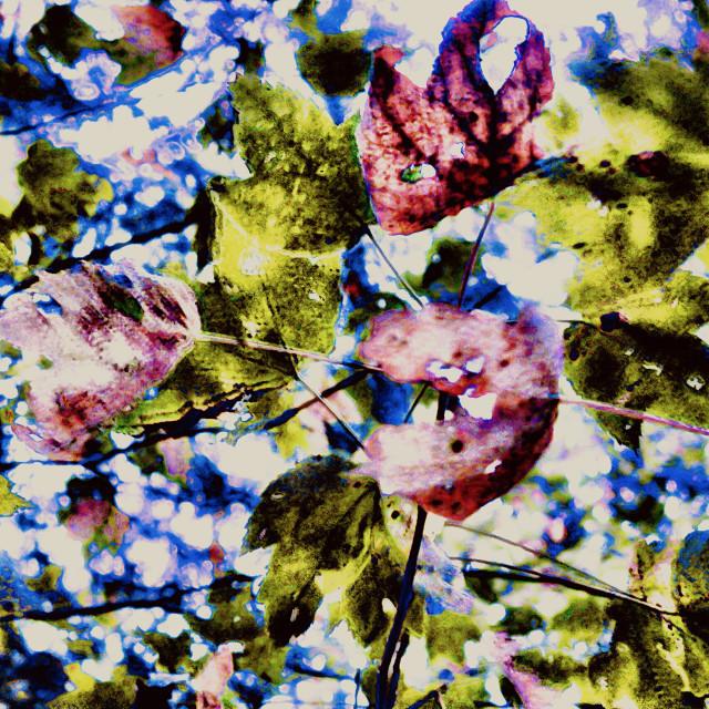 """Autumnal Impressionism"" stock image"