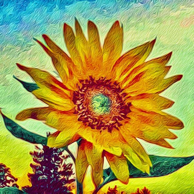 """Cemetery sunflower"" stock image"