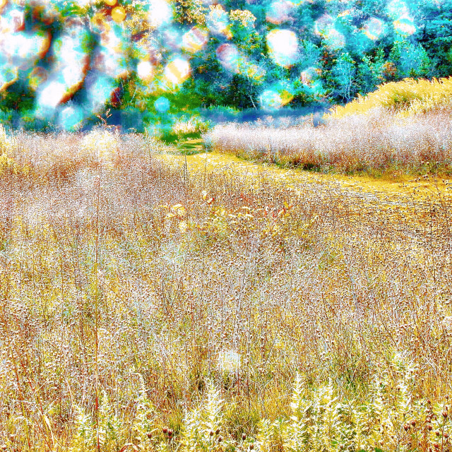 """Sun-dappled field"" stock image"
