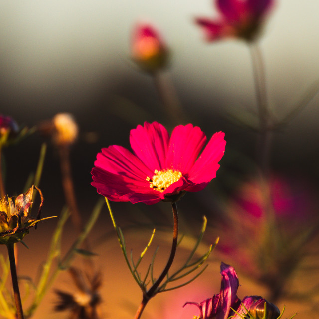 """Summerflower"" stock image"