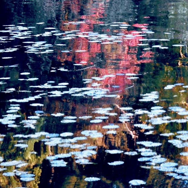 """Sunset on Lily Pond"" stock image"
