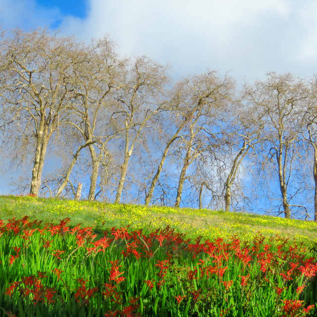 """""""Trees on the hill"""" stock image"""