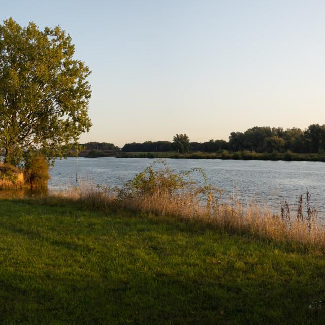 """""""Tree at river Maas countryside"""" stock image"""