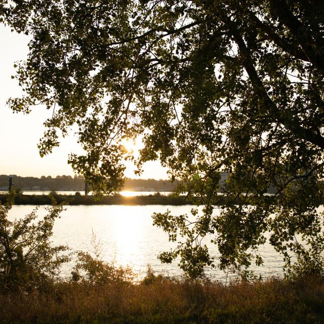 """River Maas countryside"" stock image"