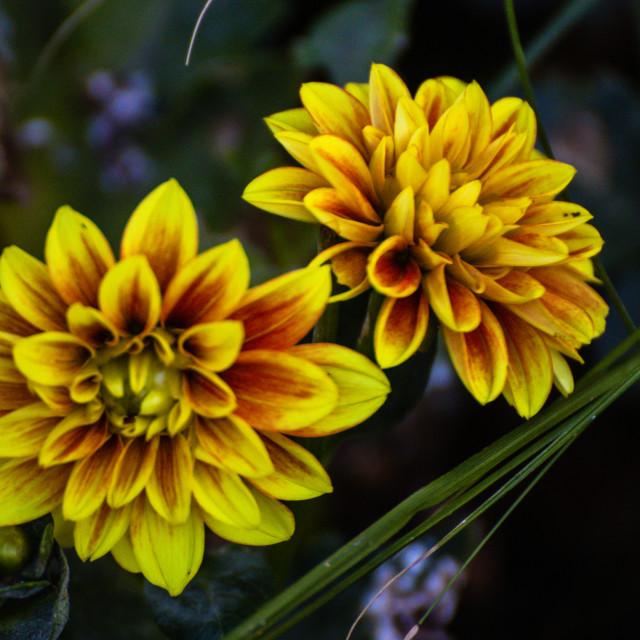 """Summerflowers"" stock image"