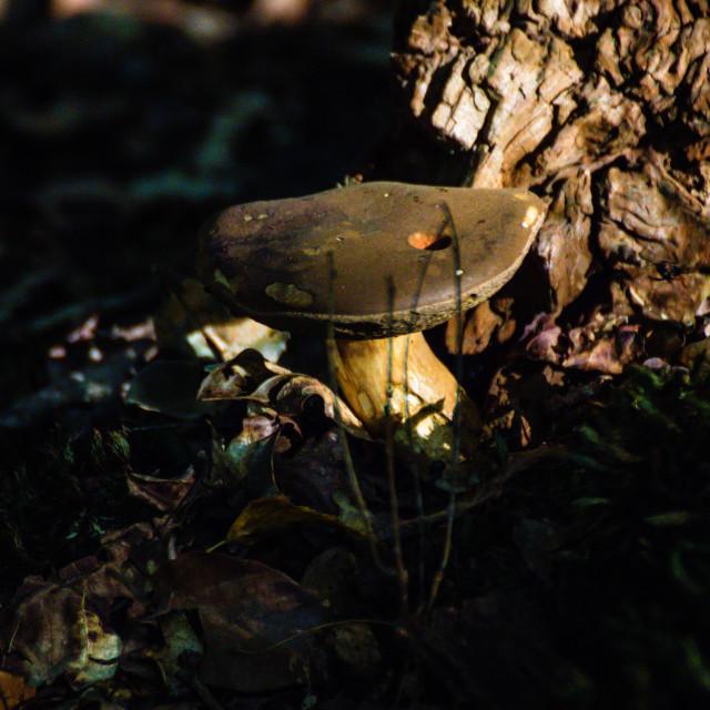 """Mushrooms"" stock image"