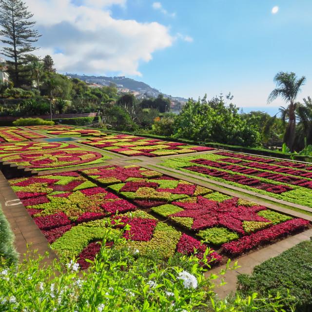 """""""Jardim Botânico da Madeira"""" stock image"""