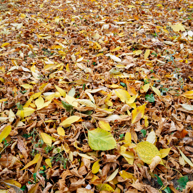 """Colorful autumn leaves carpet under the soft october sun"" stock image"