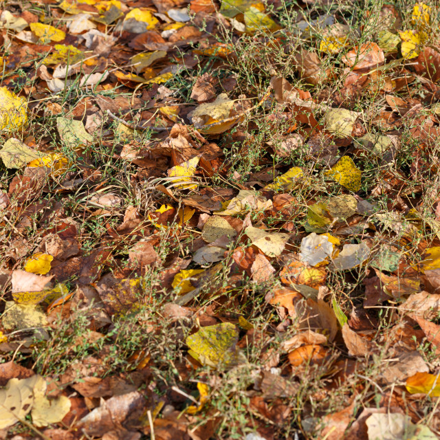 """Autumn Leaves Carpet"" stock image"
