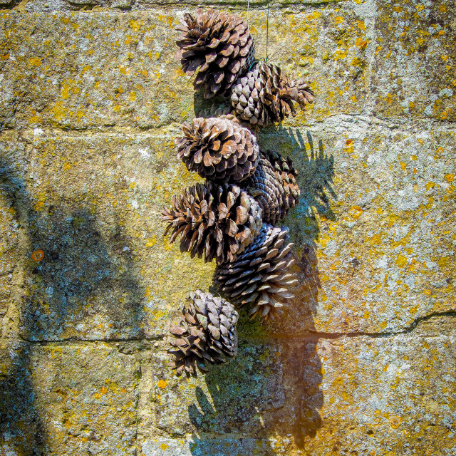 """""""Pine Cone Wall"""" stock image"""