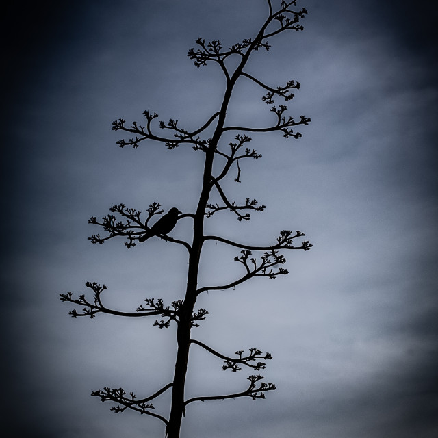 """My Nature - Bird Silhouette, San Francisco"" stock image"