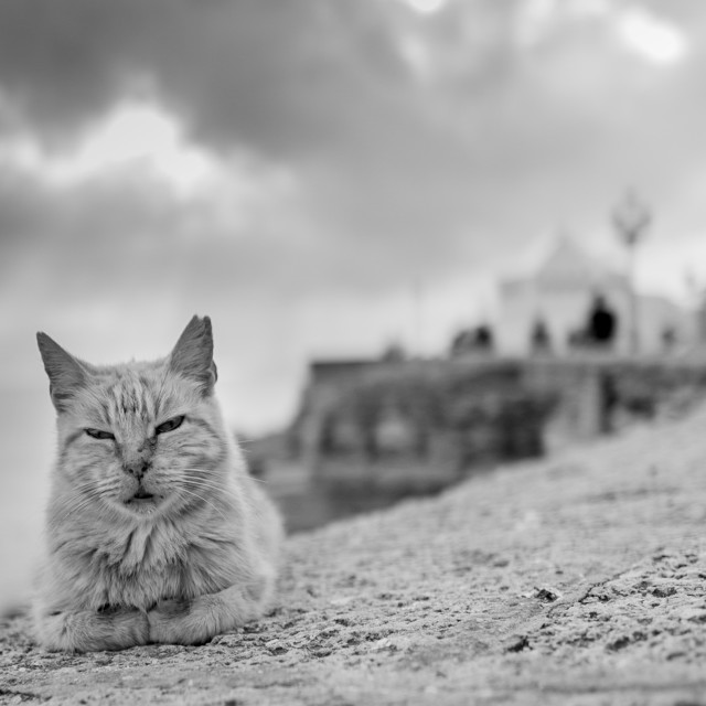 """My World - Sleepy Cat By The Sea Wall, Cadiz"" stock image"
