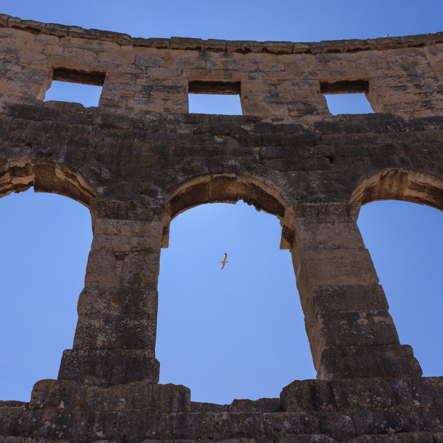 """""""Pula Arena, Croatia. View of three arches with a seagull"""" stock image"""