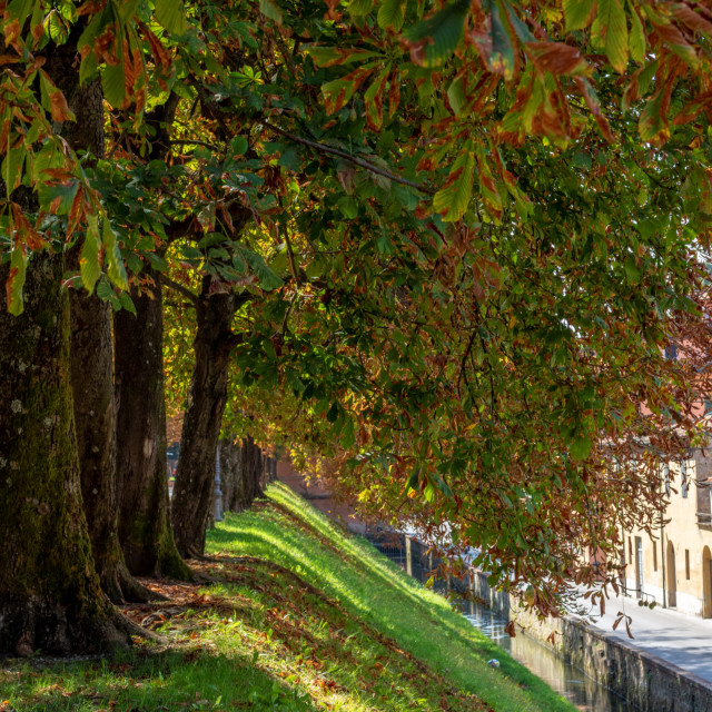 """Autumn Coloured Trees Line The Moat of Lucca - Toscana, Italy"" stock image"