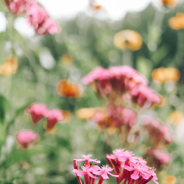 """""""wildflowers"""" stock image"""