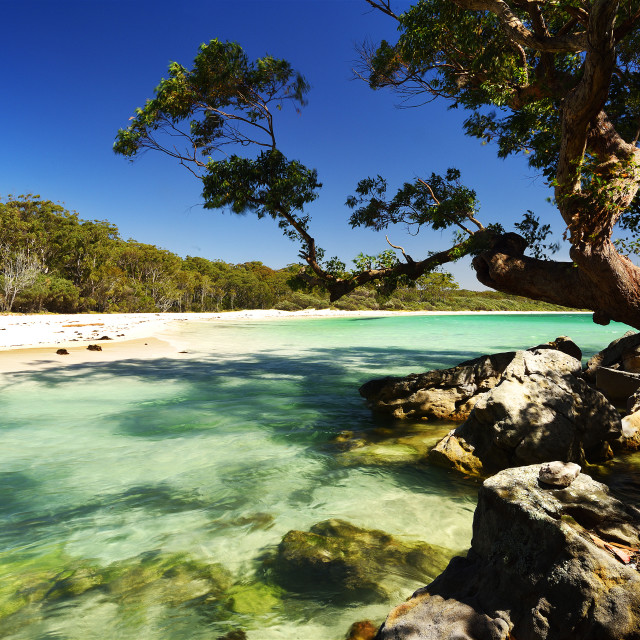 """""""Green patch Beach"""" stock image"""