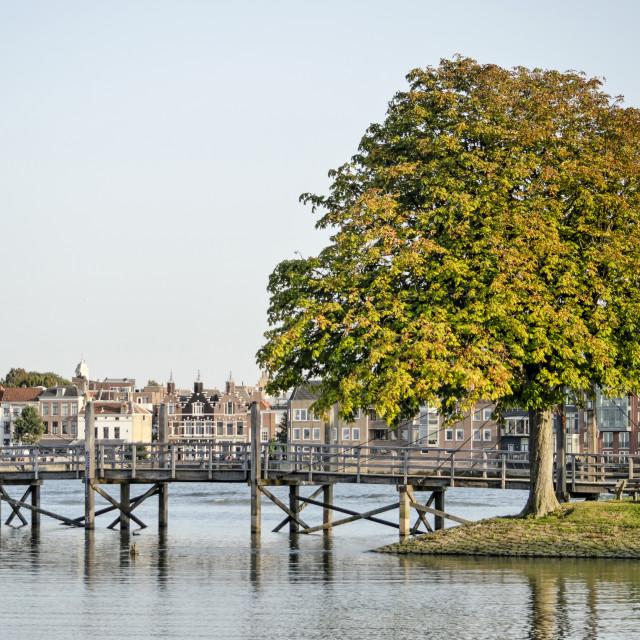 """Bridge, tree and river"" stock image"