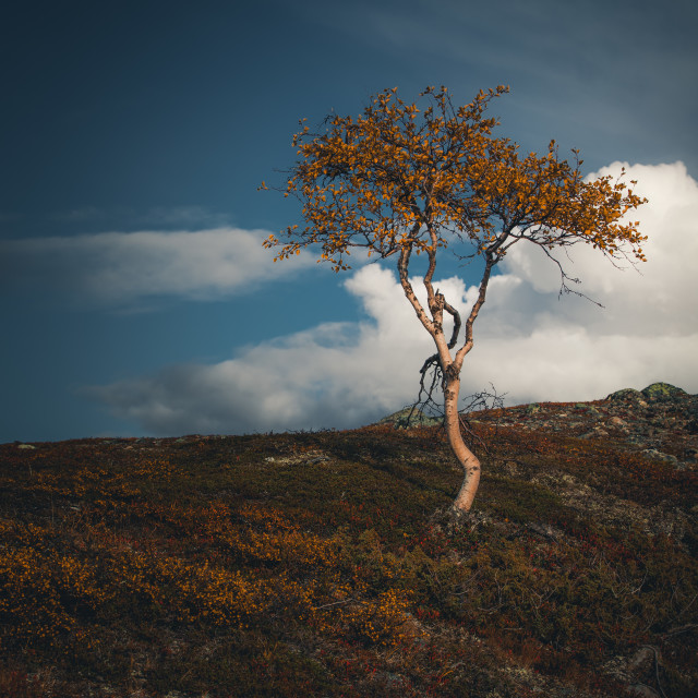 """Lonely Tree"" stock image"