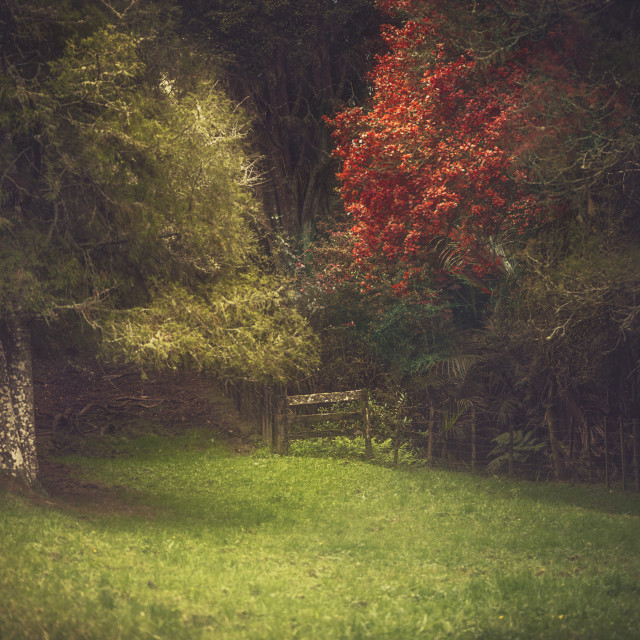 """""""The Secret Garden"""" stock image"""