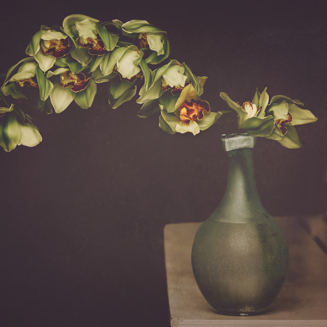"""""""Orchids in a vase"""" stock image"""