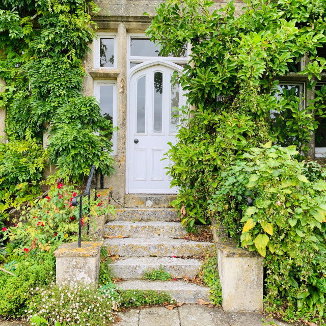 """""""Steps and door framed by plants"""" stock image"""