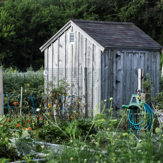 """Brewster community garden tool shed"" stock image"