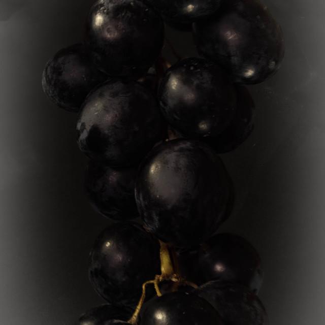 """black grape"" stock image"