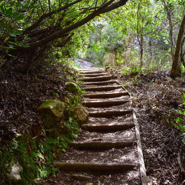 """Kirstenbosch Botanical Garden"" stock image"