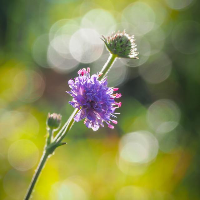 """""""Autumn Wild Flower"""" stock image"""