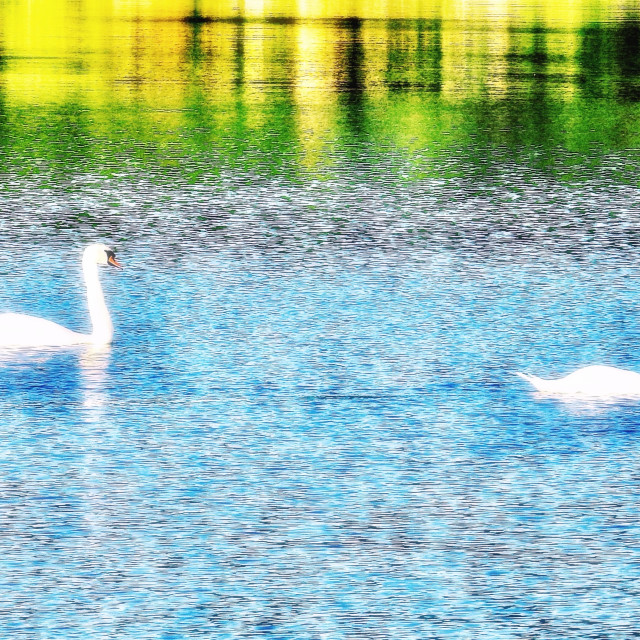 """""""Swans On A Pastel Waterway"""" stock image"""